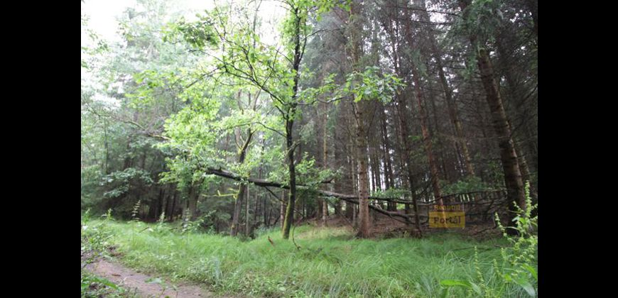 Prodej lesa 20573m2, Olešná